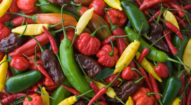Spiciest Peppers in the World
