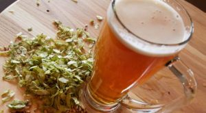 Beer Making at Home Is A Fun Fall Activity 524