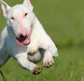 Best Dogs for An Active Lifestyle