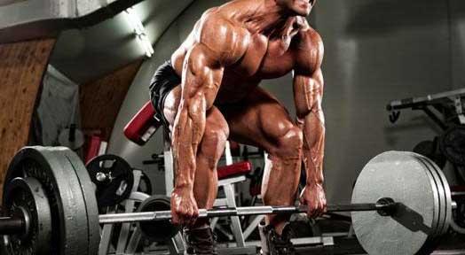 Split Training vs. Full Body Training