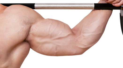 How to Get Big Arms Fast