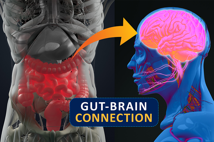 Signs of a Leaky Gut and How to Heal it - gut brain connection