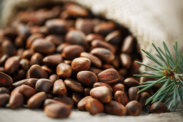 Pine seeds rich in nutritional value