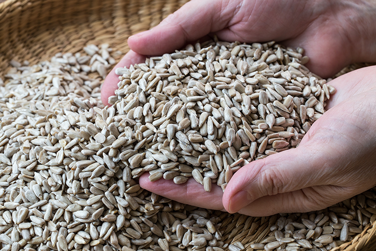 Sunflower Seeds for healthy heart